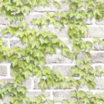 Wallhub Serene, 벽지 #W10183-1