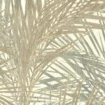Palm de luxe #45442